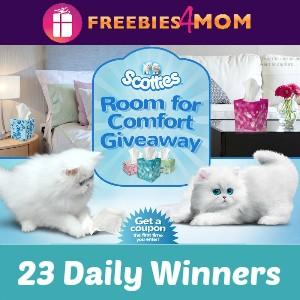 Sweeps Scotties Room For Comfort