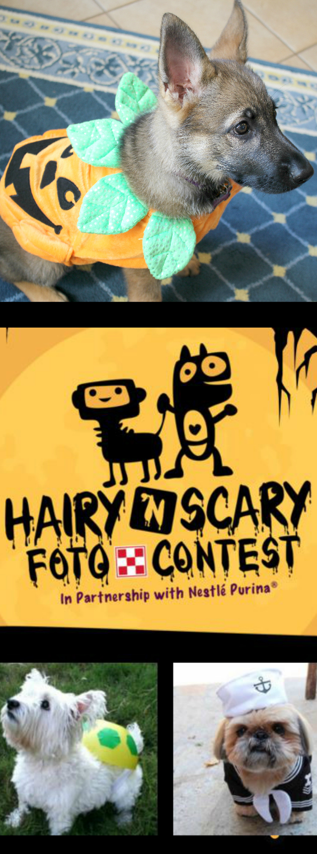 Hairy 'N Scary Foto Contest ~ Dress up your pets for Halloween