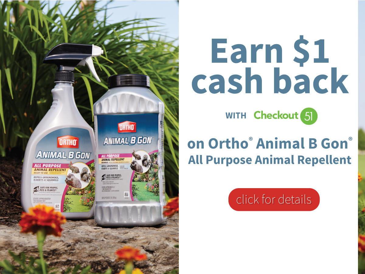 Earn $1 cash back on Ortho Animal B Gone All Purpose Animal Repellent at Walmart from Checkout 51