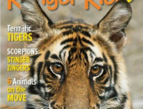 🦓Ranger Rick Magazine $14.99