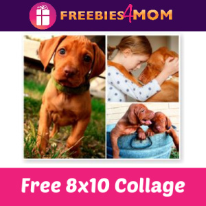 Free 8x10 Collage at CVS ($4.49 Value)