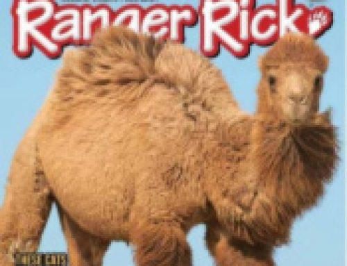 *Expired*🐼Ranger Rick Magazine $14.99