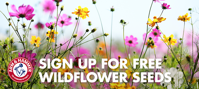 🌻Free Wildflower Seeds from Arm & Hammer