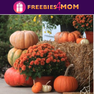 🎃Free Printable Pumpkin Carving Stencils