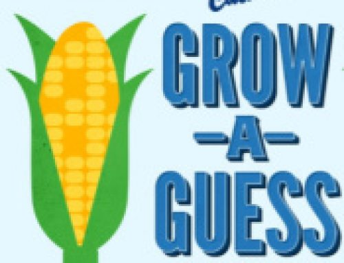 🌽Sweeps Culver's Grow a Guess (ends 9/26)